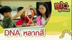 DNA หลากสี | Bio O-YEAH! [Mahidol Kids]